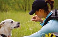 ガイガーリグは犬の散歩にもいい
