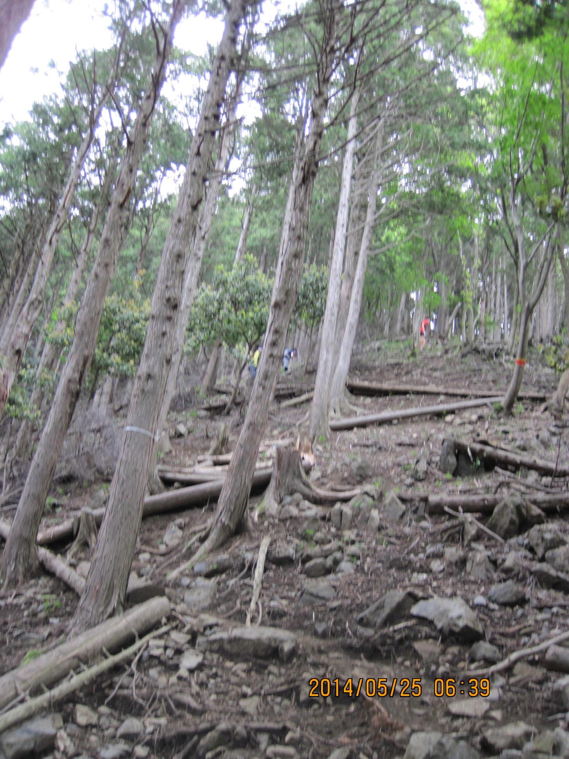 樹林帯をひたすら登る
