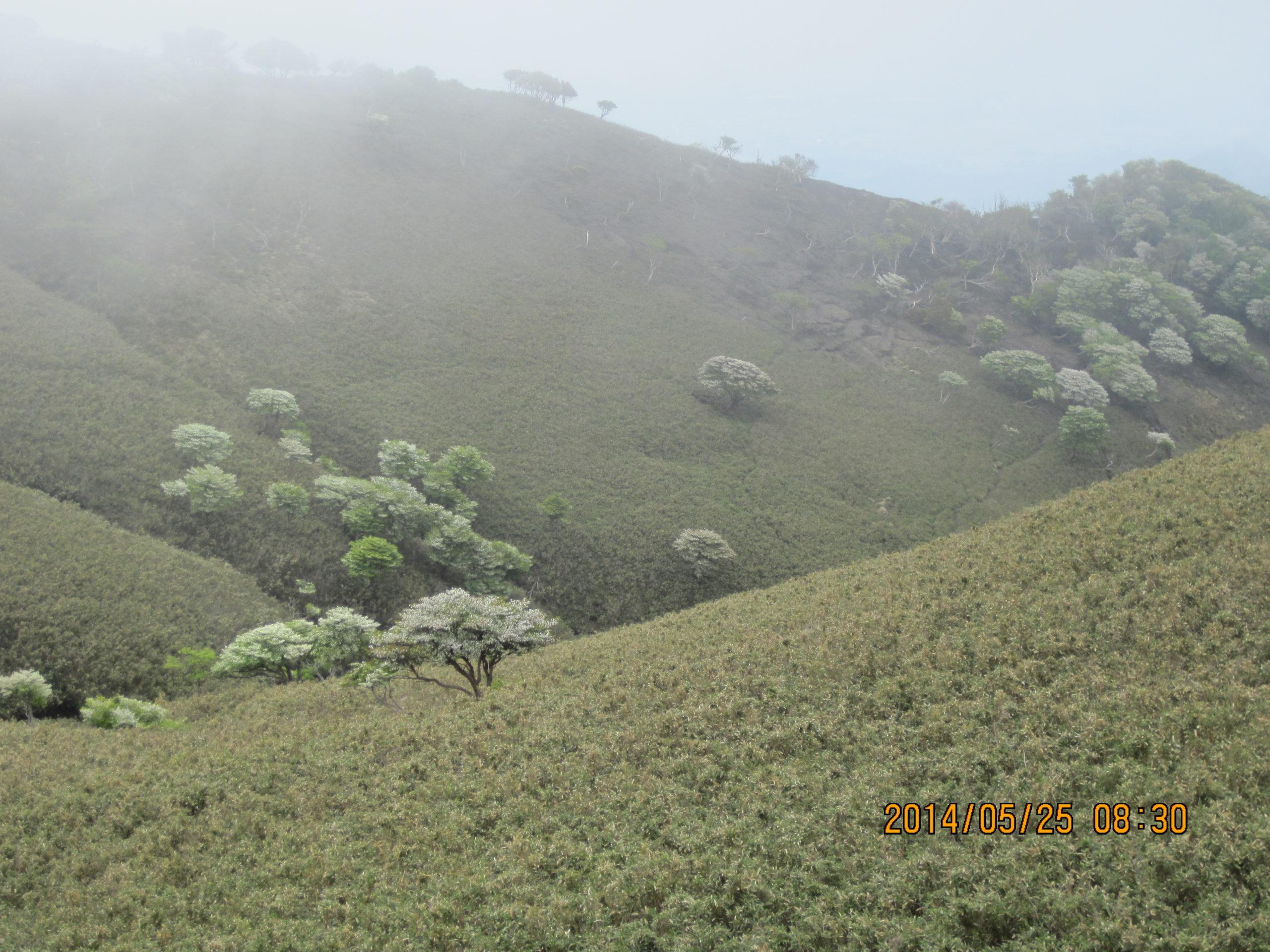 竜ヶ岳の羊の群れ2