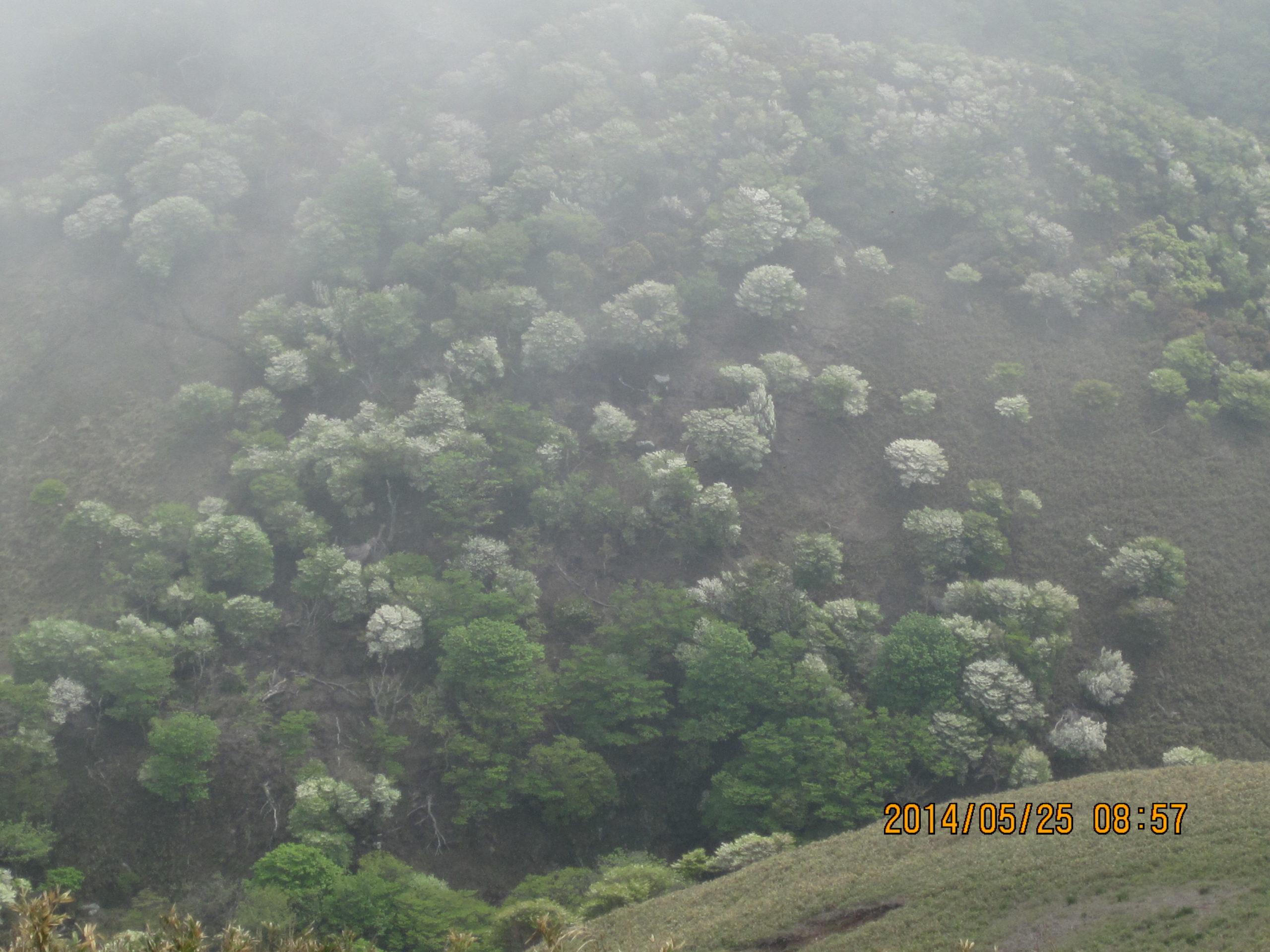 竜ヶ岳の羊の群れ5
