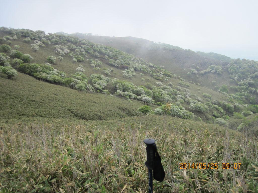 竜ヶ岳(鈴鹿)のシロヤシオ登山|春になると羊が群れる山とは?
