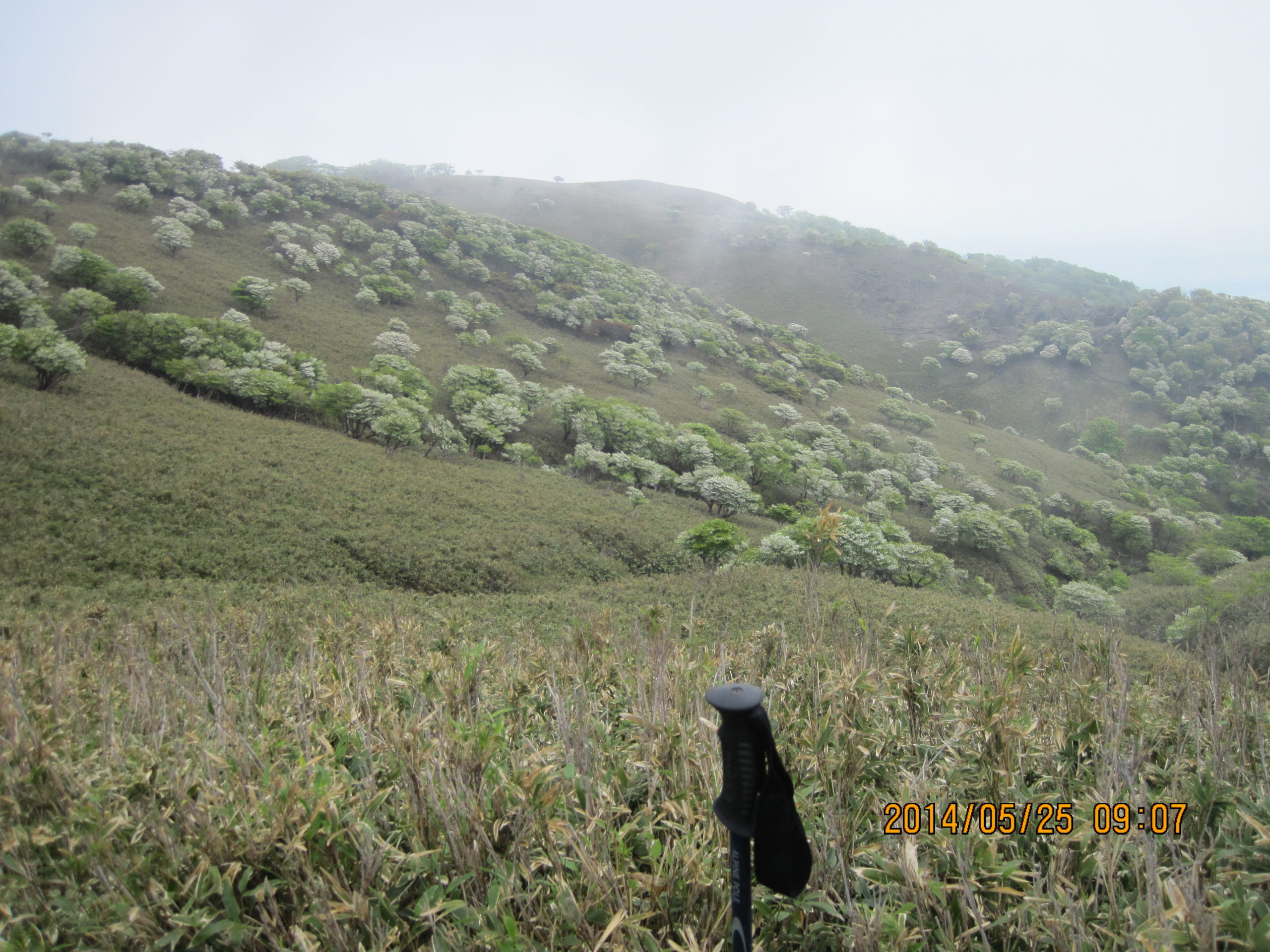 竜ヶ岳の羊の群れ3
