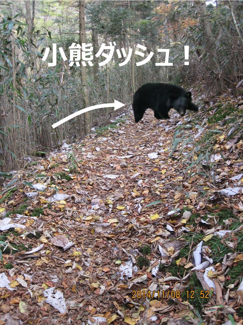 小熊、ダッシュ!